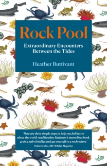Rock Pool: Extraordinary Encounters Between the Tides : A Life -Long Fascination told in Twenty-Four Creatures, Paperback / softback Book
