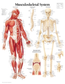 Musculoskeletal System Laminated Poster, Poster Book