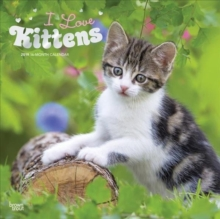Kittens, I Love 2019 Square Wall Calendar, Calendar Book