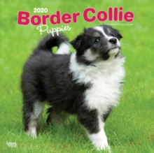 Border Collie Puppies 2020 Square Wall Calendar, Calendar Book