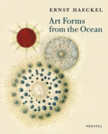 Art Forms from the Ocean : The Radiolarian Prints of Ernst Haeckel, Paperback Book